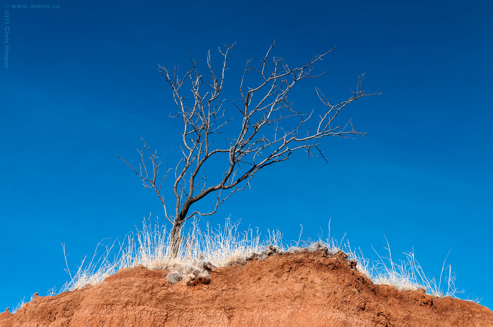 A bare tree on top of a geological formation of red sandstone in Palo Duro Canyon