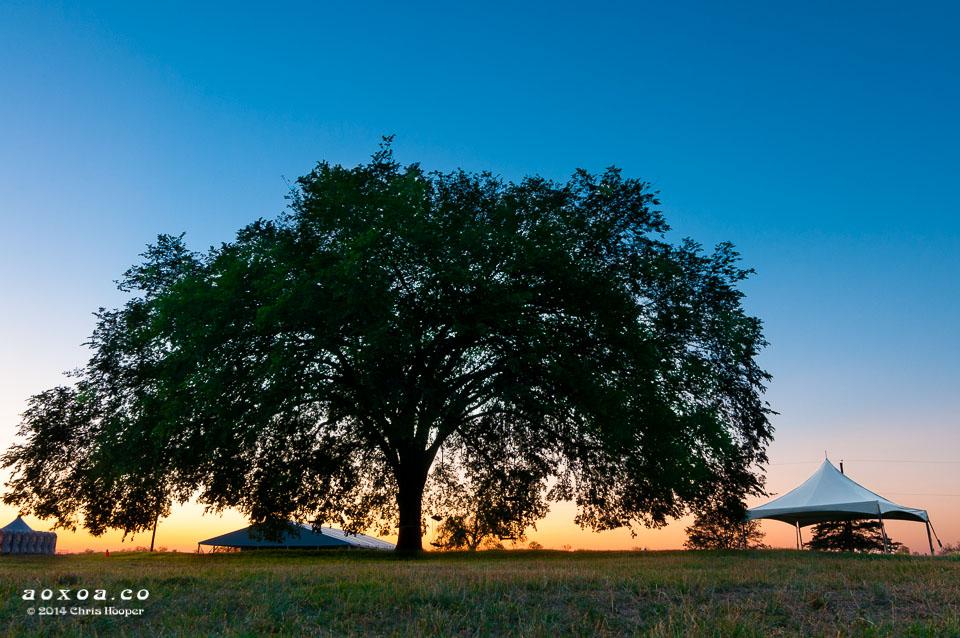 huge tree at carson creek ranch