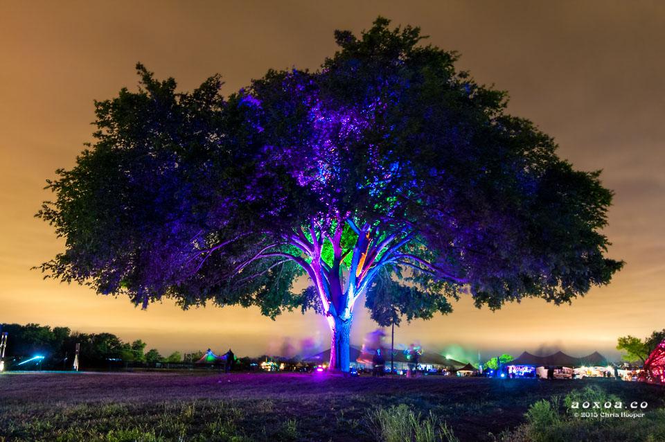 aoxoa tree euphoria music camping festival
