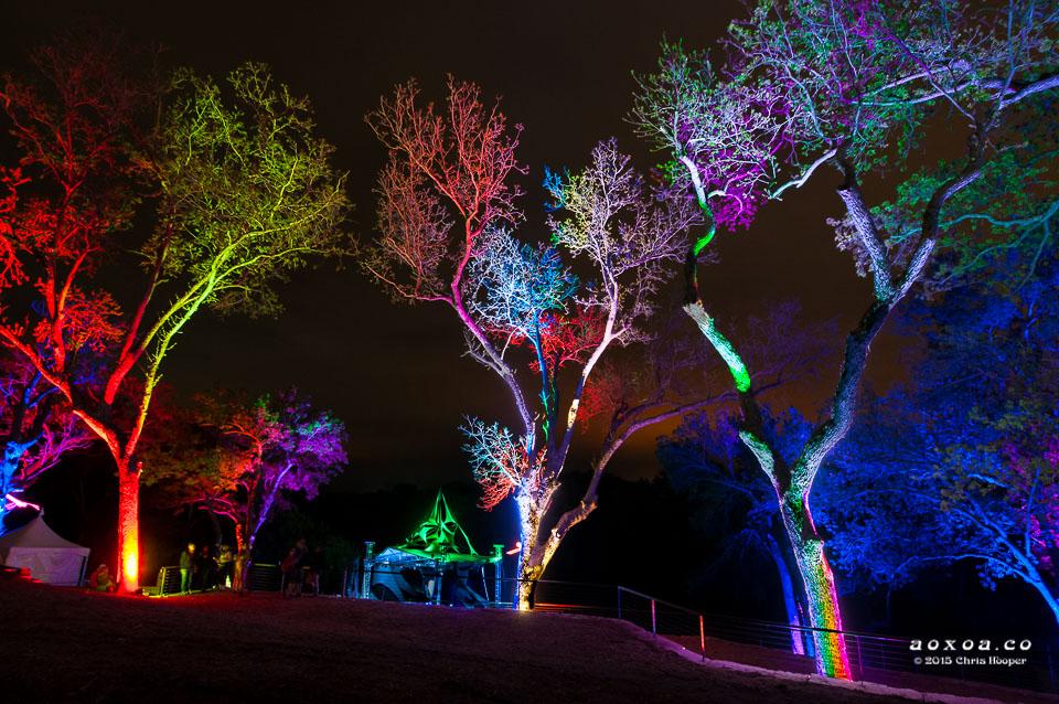 aoxoa-trees-euphoria-music-camping-festival-2015