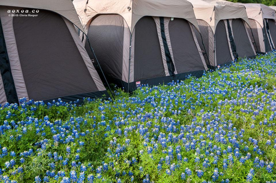 euphoria music-camping festival